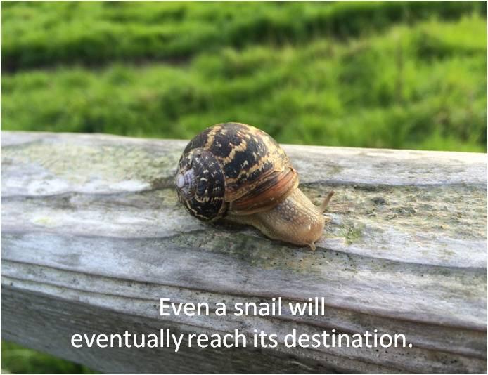 Snail Destination